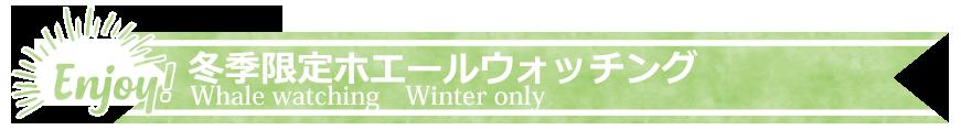 冬季限定ホエールウォッチングプラン