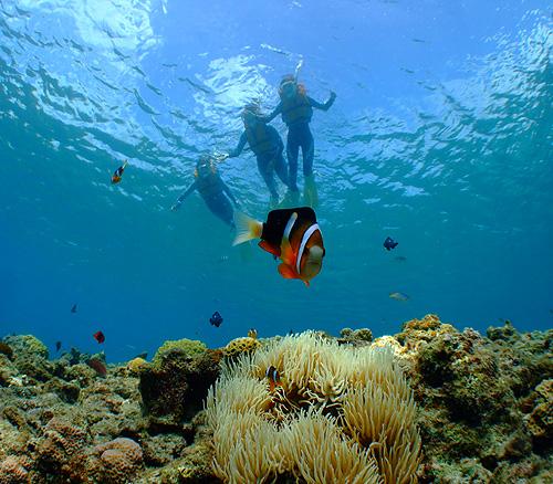 大サンゴ礁ビーチシュノーケリング